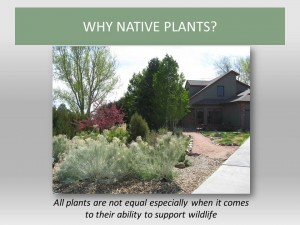 Bringing Your Garden to Life Why Native Plants